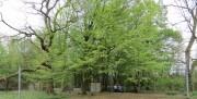groen smal